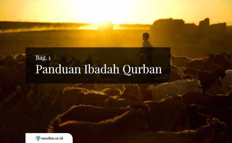 Panduan Ibadah Qurban (bagian 1)