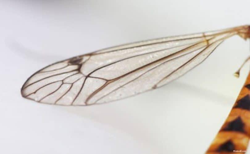 Agar Dunia Tak Memenjara (2): Sadarilah Dunia Lebih Hina Dari Sayap Nyamuk