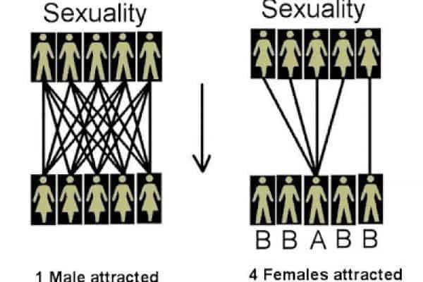 Mengapa Perempuan Tidak Lebih Dari Satu Suami?